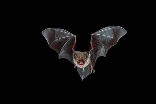 The patient's family had contacted numerous local agencies about bats over several years but were never told to seek medical care.