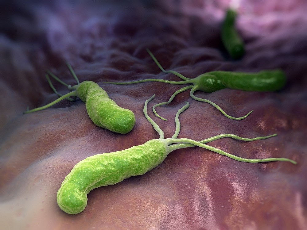 <i>H pylori</i> Recurrence Low One Year After Eradication