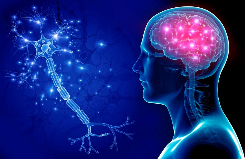 No Change in Brain Structure, Cognitive Performance in Aviremic HIV