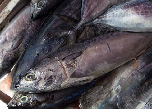 Seafood Company Halts Production After Food Safety Violations Found