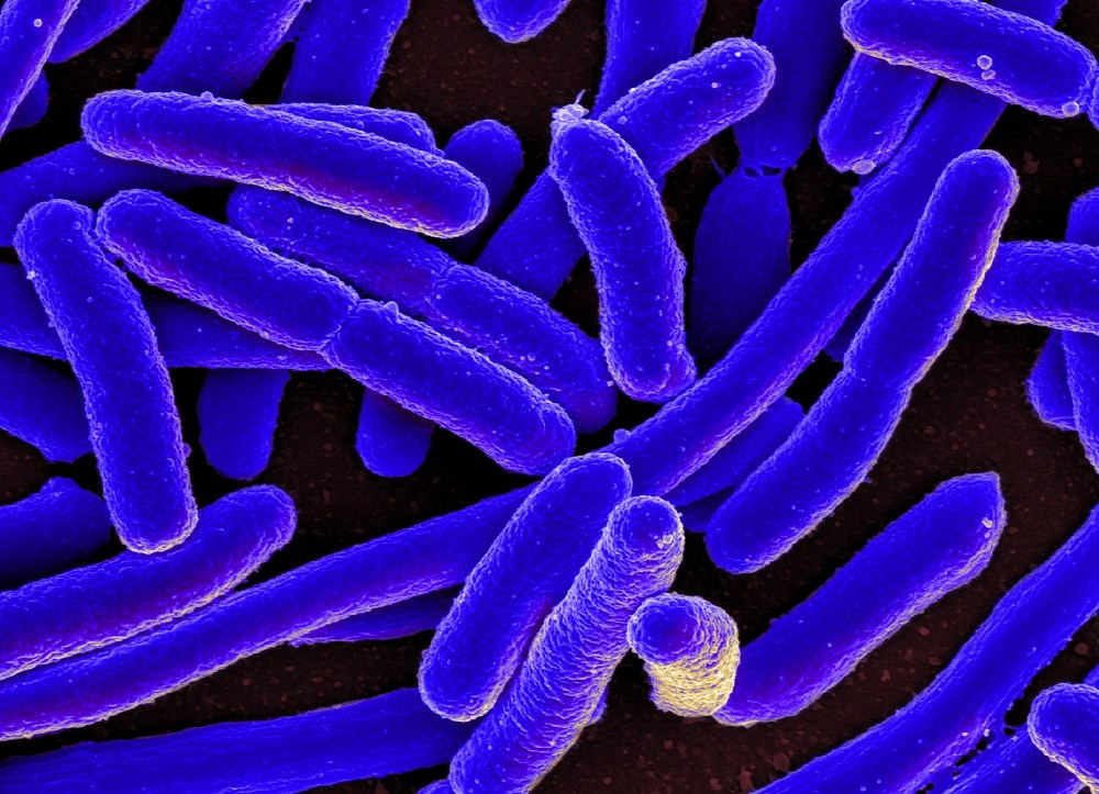 Person-to-person or environmental transmission is low in mcr-1 gene antibiotic resistant bacteria. <i> Photo Credit: By NIAID via Wikimedia Commons. </i>