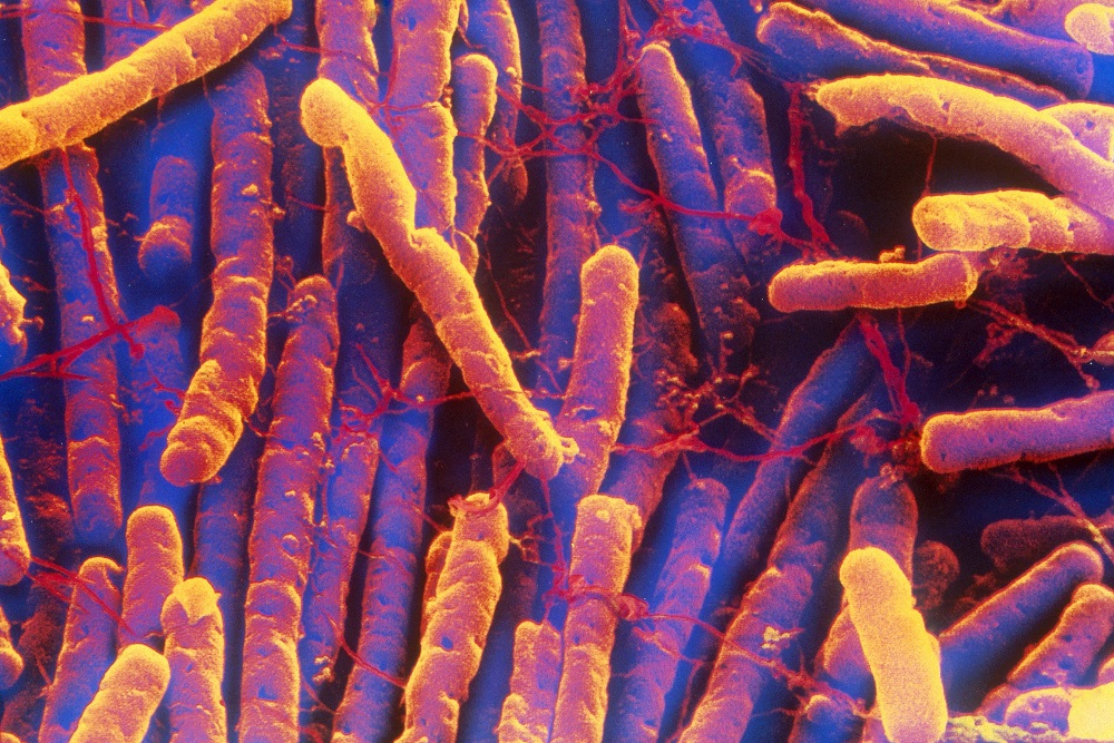 Can clostridium difficile be transmitted sexually