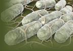 Zemdri Now Treats Complicated UTI, Pyelonephritis