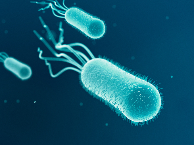 a study of escherichia coli or e coli The first large-scale genetic study of escherichia coli (e coli) cultured from patients with bloodstream infections in england showed that drug resistant 'superbugs' are not always out-competing other strains.