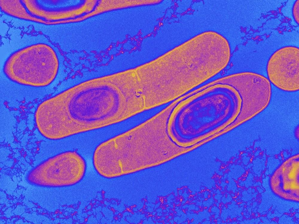 Biotherapeutics for the Prevention of <i>Clostridium difficile</i> Infection