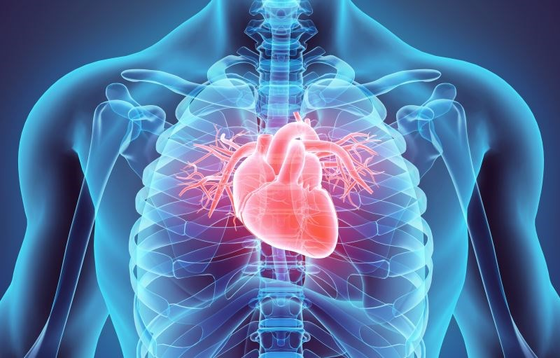 Rheumatic Heart Disease Deaths Decline Worldwide