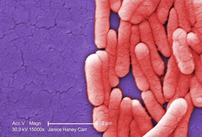 High Rates of Salmonella Contamination Identified in Kratom