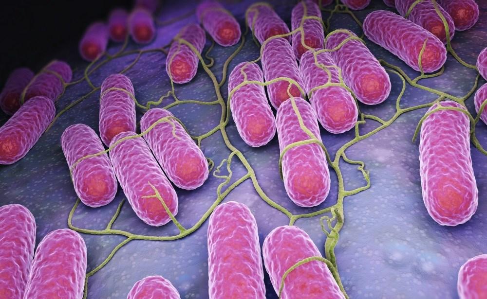FDA: Whey Powder Behind Recent Salmonella-Linked Recalls